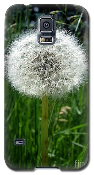 Dandelion Fluff Galaxy S5 Case by Kerri Mortenson