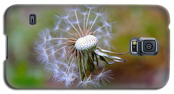 Galaxy S5 Case featuring the photograph Dandelion by Lisa L Silva