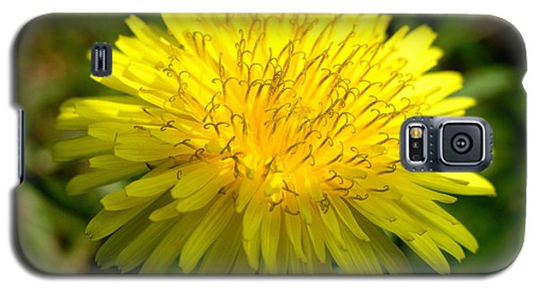 Galaxy S5 Case featuring the digital art Dandelion by Ron Harpham