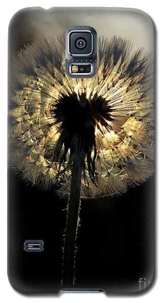 Dandelion Sunrise - 1 Galaxy S5 Case