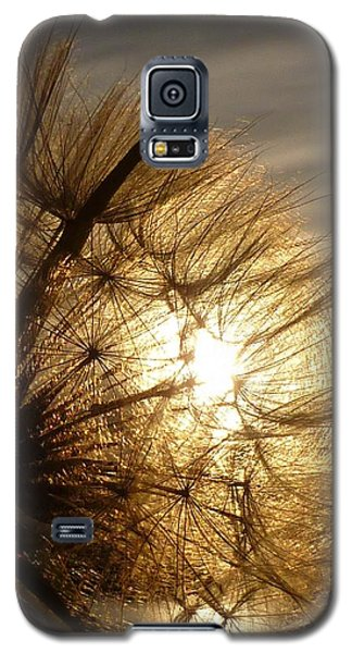 Dandelion Sunset Galaxy S5 Case