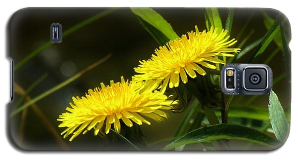Galaxy S5 Case featuring the photograph Dandelions by Sherman Perry