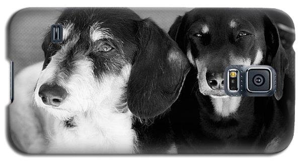 Dapper Doxies Galaxy S5 Case