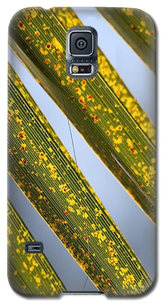 Galaxy S5 Case featuring the photograph Dappled Light by Amy Gallagher