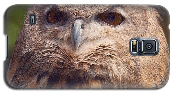 Dare I Say Owls Are A Hoot? Galaxy S5 Case by Heidi Hermes