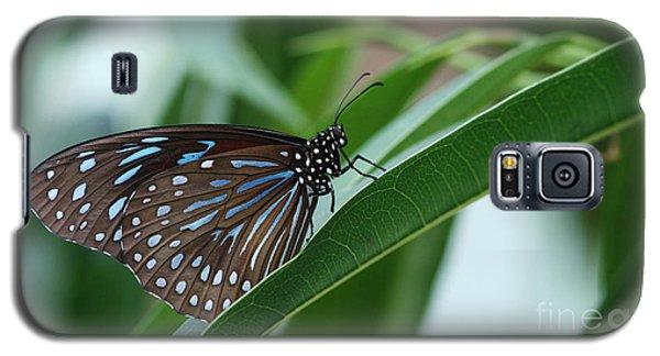 Dark Blue Tiger Butterfly #2 Galaxy S5 Case by Judy Whitton