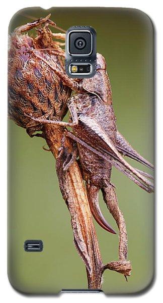 Cricket Galaxy S5 Case - Dark Bush Cricket by Heath Mcdonald