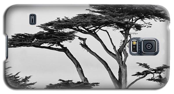 Dark Cypress Galaxy S5 Case by Melinda Ledsome