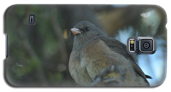 Dark-eyed Junco Galaxy S5 Case
