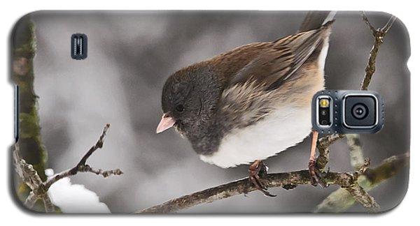 Dark-eyed Junco Galaxy S5 Case