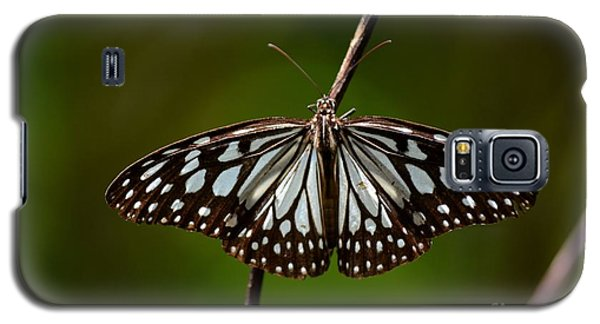 Dark Glassy Tiger Butterfly On Branch Galaxy S5 Case