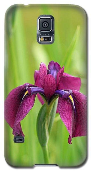 Dark Magenta Iris Galaxy S5 Case