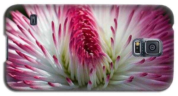 Dark Pink And White Spiky Petals Galaxy S5 Case