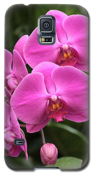 Galaxy S5 Case featuring the photograph Dark Pink Moth Orchids by Harold Rau