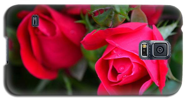Dark Pink Roses #1 Galaxy S5 Case