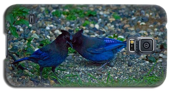 Darling I Have To Tell You A Secret-sweet Stellar Jay Couple Galaxy S5 Case by Eti Reid