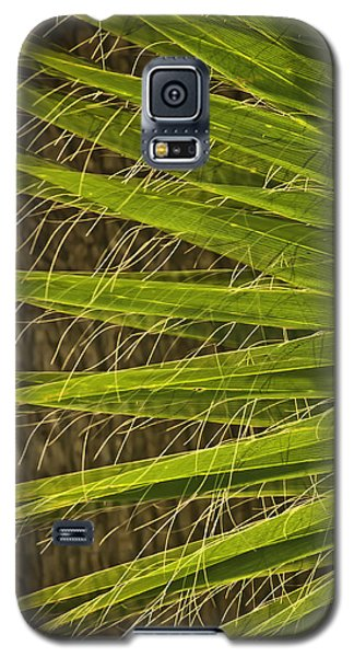 Galaxy S5 Case featuring the photograph Date Palm by Sherri Meyer