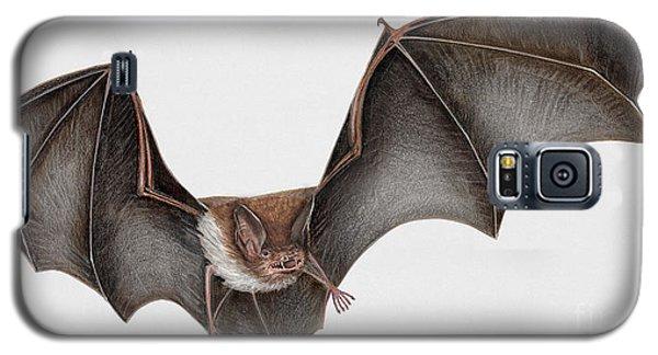Daubentons Bat Myotis Daubentonii - Murin De Daubenton-murcielago Ribereno-vespertilio Di Daubenton Galaxy S5 Case