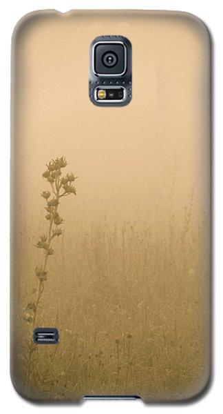 Dawning Mist Galaxy S5 Case by Tim Good