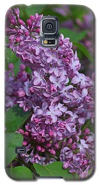 Dawns Lilacs Galaxy S5 Case