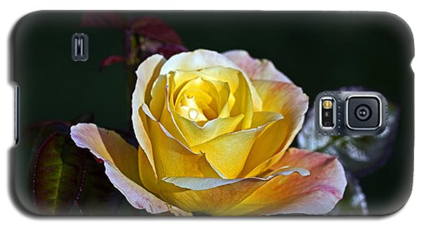 Galaxy S5 Case featuring the photograph Day Breaker Rose by Kate Brown