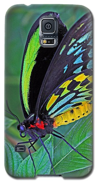 Day-glo Butterfly Galaxy S5 Case