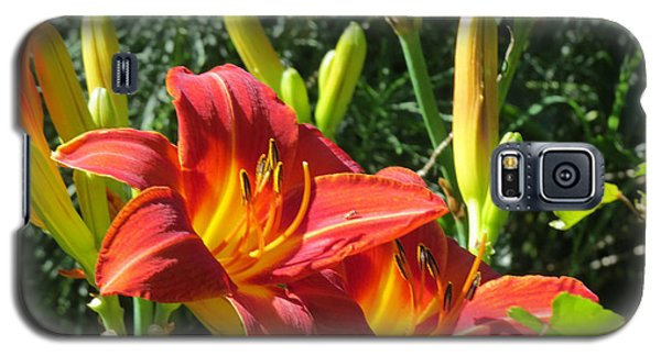 Day Lily 4 Galaxy S5 Case