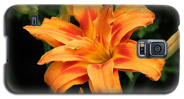 Galaxy S5 Case featuring the photograph Day Lily by Janet Greer Sammons