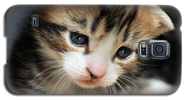 Galaxy S5 Case featuring the photograph Daydreamer Kitten by Terri Waters