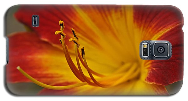 Daylily Close Up II Galaxy S5 Case