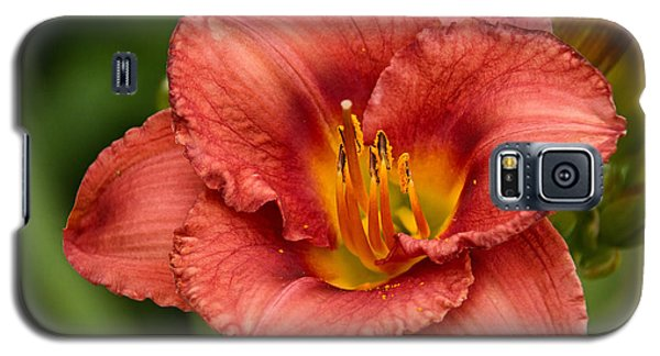 Daylily Intensity Galaxy S5 Case