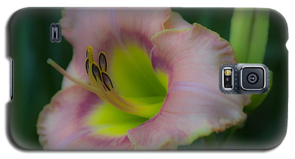 Daylily Galaxy S5 Case by Phil Abrams