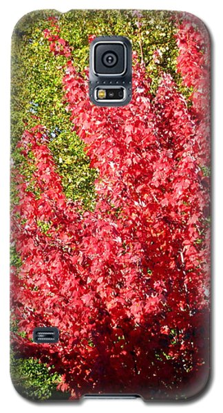 Galaxy S5 Case featuring the photograph Days Like This by Kathy Bassett
