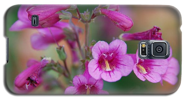 Galaxy S5 Case featuring the photograph Pink Flowers by Tam Ryan