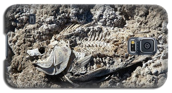 Dead Fish On Salt Flat Galaxy S5 Case by Jim West