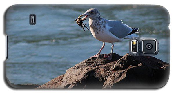 Death By Seagull Galaxy S5 Case by Nance Larson