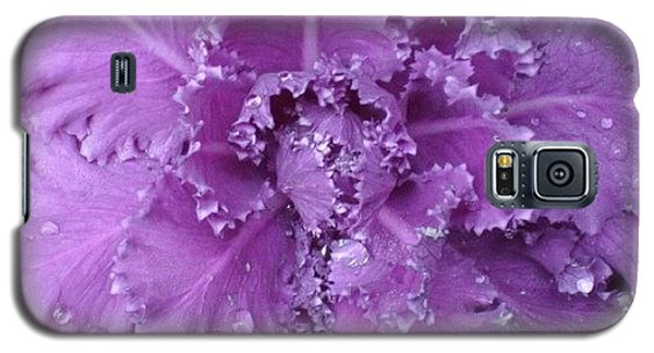 #decorative #cabbage #plant After A Galaxy S5 Case