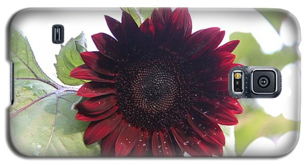Galaxy S5 Case featuring the photograph Deep Red Sunflower by Yumi Johnson