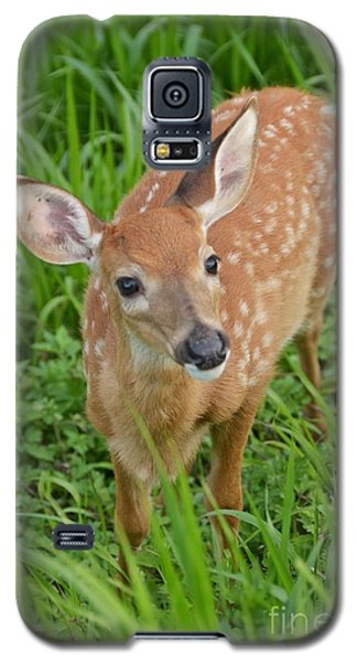Deer 42 Galaxy S5 Case