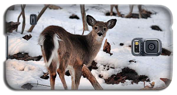 Deer And Snow Galaxy S5 Case