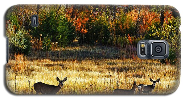 Galaxy S5 Case featuring the photograph Deer Autumn by Bill Kesler