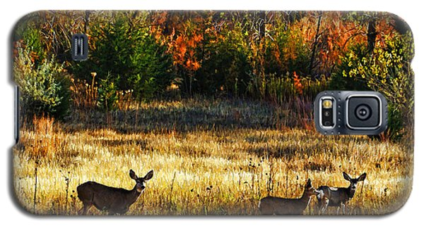 Deer Autumn Galaxy S5 Case by Bill Kesler