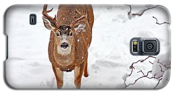 Galaxy S5 Case featuring the photograph Deer Buck In Snow by Peggy Collins
