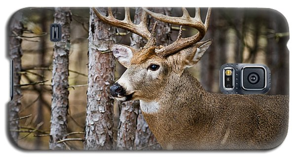 Deer Buck Galaxy S5 Case