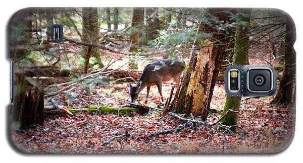 Deer Grazing Galaxy S5 Case