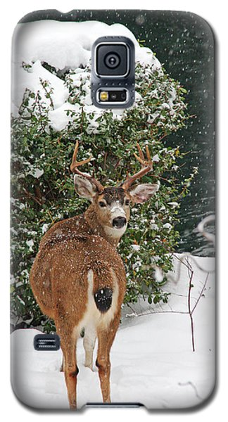 Galaxy S5 Case featuring the photograph Deer In Falling Snow by Peggy Collins