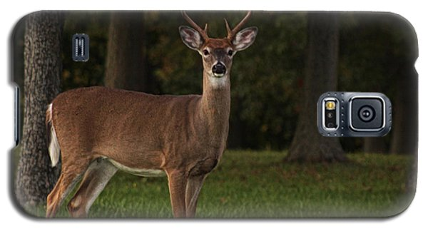 Galaxy S5 Case featuring the photograph Deer In Headlight Look by Tammy Espino