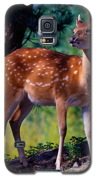 Deer In The Woods Galaxy S5 Case