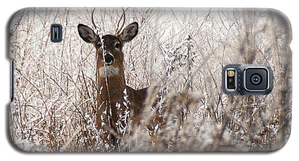 Deer In Winter Galaxy S5 Case
