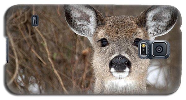 Deer Galaxy S5 Case by Jeannette Hunt